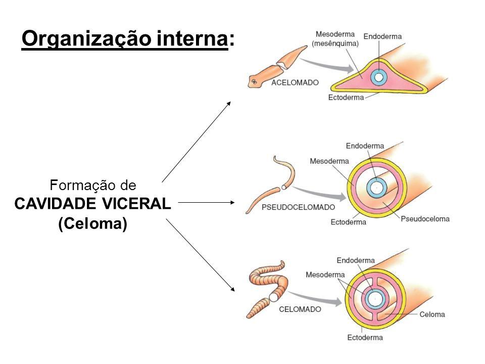 RadialBilateral Simetria: