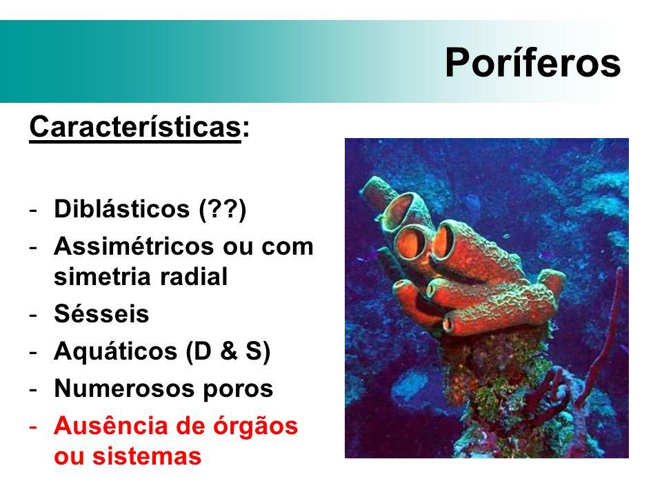 Poríferos Características: -Diblásticos (??) -Assimétricos ou com simetria radial -Sésseis -Aquáticos (D & S) -Numerosos poros -Ausência de órgãos ou