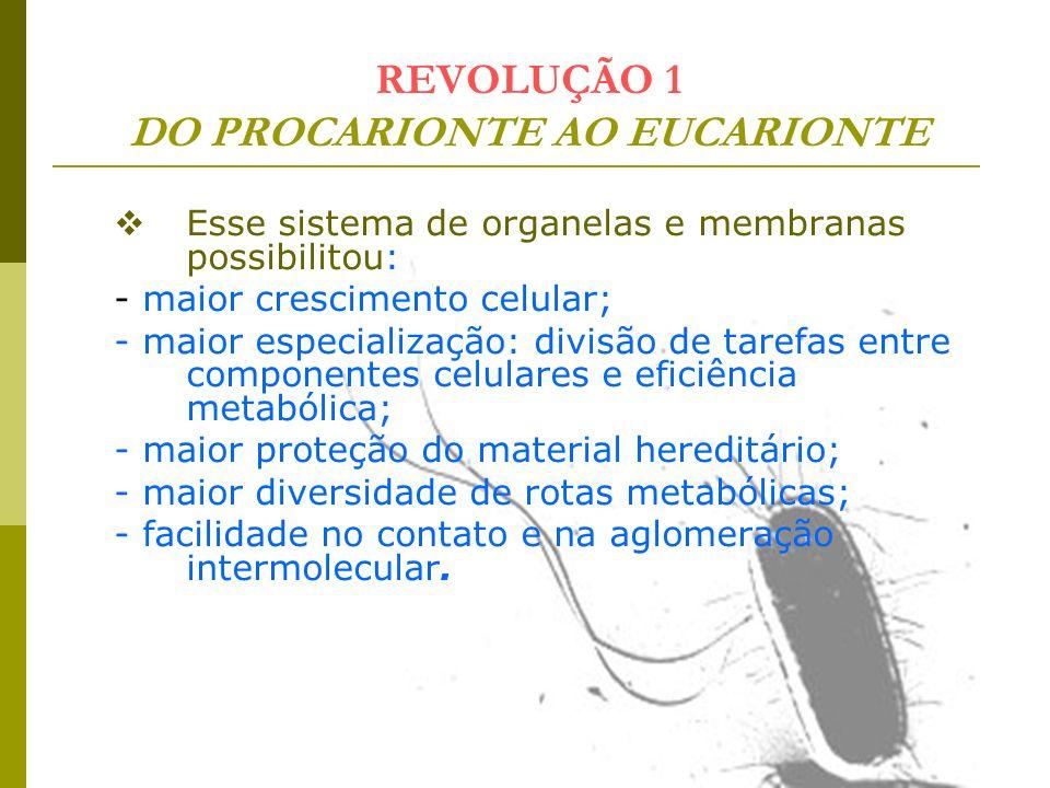 REVOLUÇÃO 1 DO PROCARIONTE AO EUCARIONTE Esse sistema de organelas e membranas possibilitou: - maior crescimento celular; - maior especialização: divi