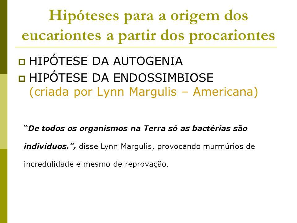 Hipóteses para a origem dos eucariontes a partir dos procariontes HIPÓTESE DA AUTOGENIA HIPÓTESE DA ENDOSSIMBIOSE (criada por Lynn Margulis – American