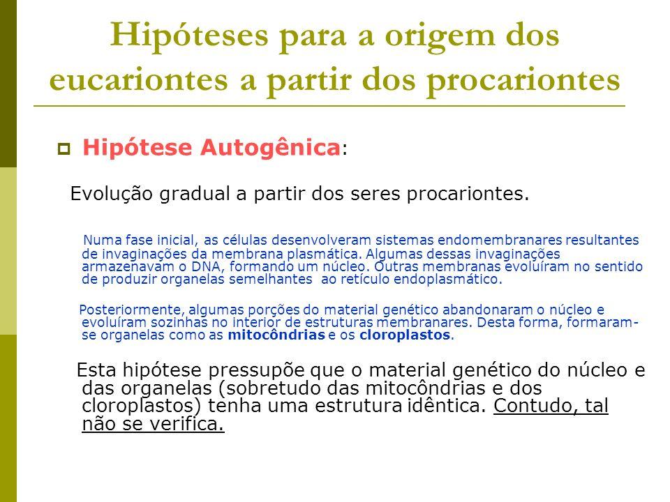 Hipóteses para a origem dos eucariontes a partir dos procariontes Hipótese Autogênica : Evolução gradual a partir dos seres procariontes. Numa fase in
