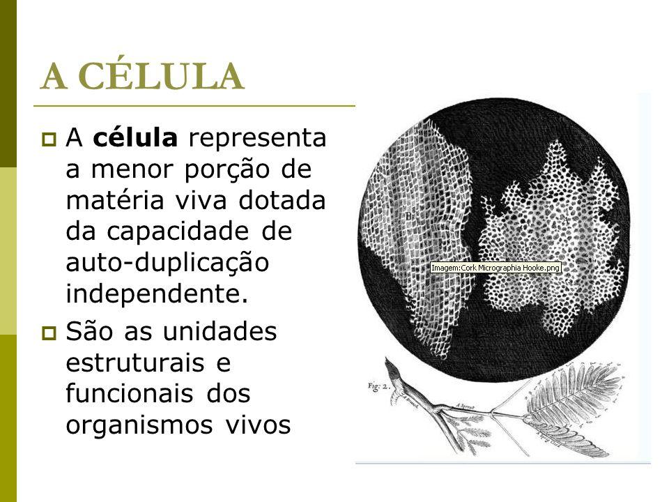 A CÉLULA A célula representa a menor porção de matéria viva dotada da capacidade de auto-duplicação independente. São as unidades estruturais e funcio