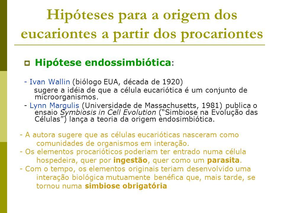 Hipóteses para a origem dos eucariontes a partir dos procariontes Hipótese endossimbiótica : - Ivan Wallin (biólogo EUA, década de 1920) sugere a idéi