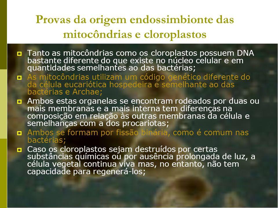 Provas da origem endossimbionte das mitocôndrias e cloroplastos Tanto as mitocôndrias como os cloroplastos possuem DNA bastante diferente do que exist