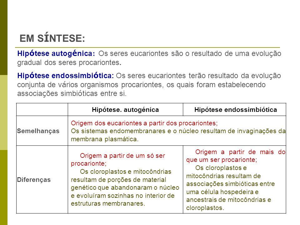 Hipótese. autogénicaHipótese endossimbiótica Semelhanças Origem dos eucariontes a partir dos procariontes; Os sistemas endomembranares e o núcleo resu