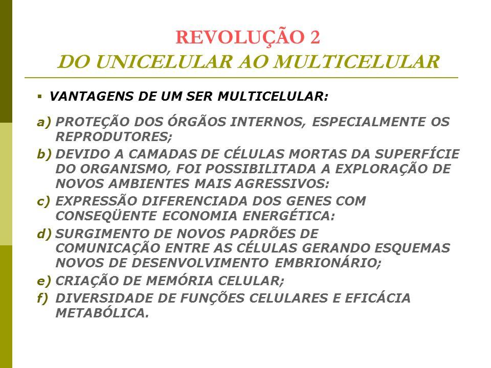 REVOLUÇÃO 2 DO UNICELULAR AO MULTICELULAR VANTAGENS DE UM SER MULTICELULAR: a)PROTEÇÃO DOS ÓRGÃOS INTERNOS, ESPECIALMENTE OS REPRODUTORES; b)DEVIDO A
