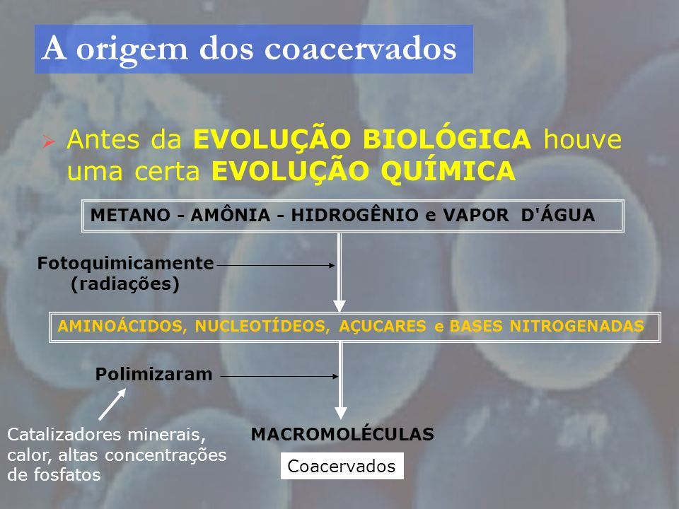 A origem dos coacervados Antes da EVOLUÇÃO BIOLÓGICA houve uma certa EVOLUÇÃO QUÍMICA METANO - AMÔNIA - HIDROGÊNIO e VAPOR D'ÁGUA AMINOÁCIDOS, NUCLEOT