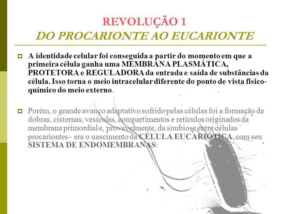 REVOLUÇÃO 1 DO PROCARIONTE AO EUCARIONTE A identidade celular foi conseguida a partir do momento em que a primeira célula ganha uma MEMBRANA PLASMÁTIC