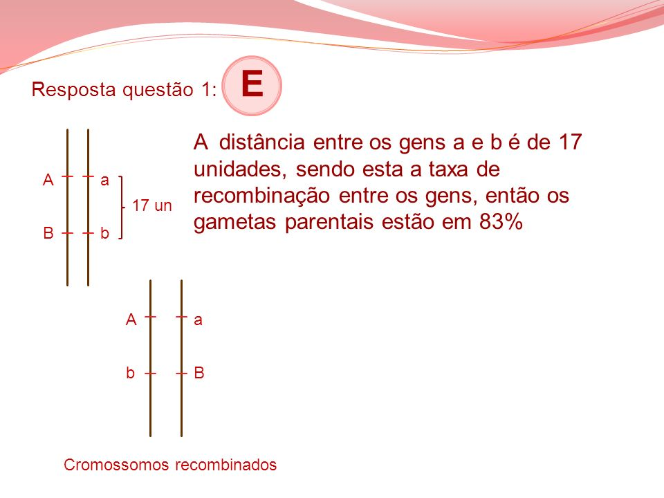 Resposta questão 1: E ABAB abab A distância entre os gens a e b é de 17 unidades, sendo esta a taxa de recombinação entre os gens, então os gametas pa