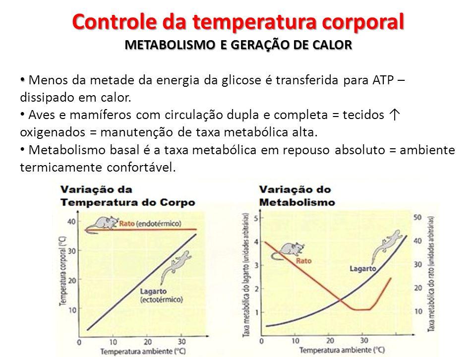 METABOLISMO E GERAÇÃO DE CALOR Menos da metade da energia da glicose é transferida para ATP – dissipado em calor. Aves e mamíferos com circulação dupl