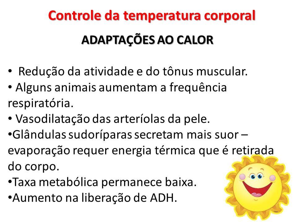 Controle da temperatura corporal ADAPTAÇÕES AO CALOR Redução da atividade e do tônus muscular. Alguns animais aumentam a frequência respiratória. Vaso