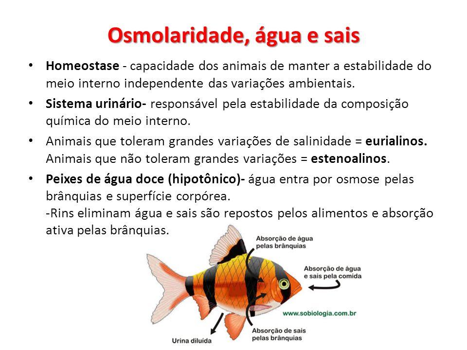 Osmolaridade, água e sais Homeostase - capacidade dos animais de manter a estabilidade do meio interno independente das variações ambientais. Sistema