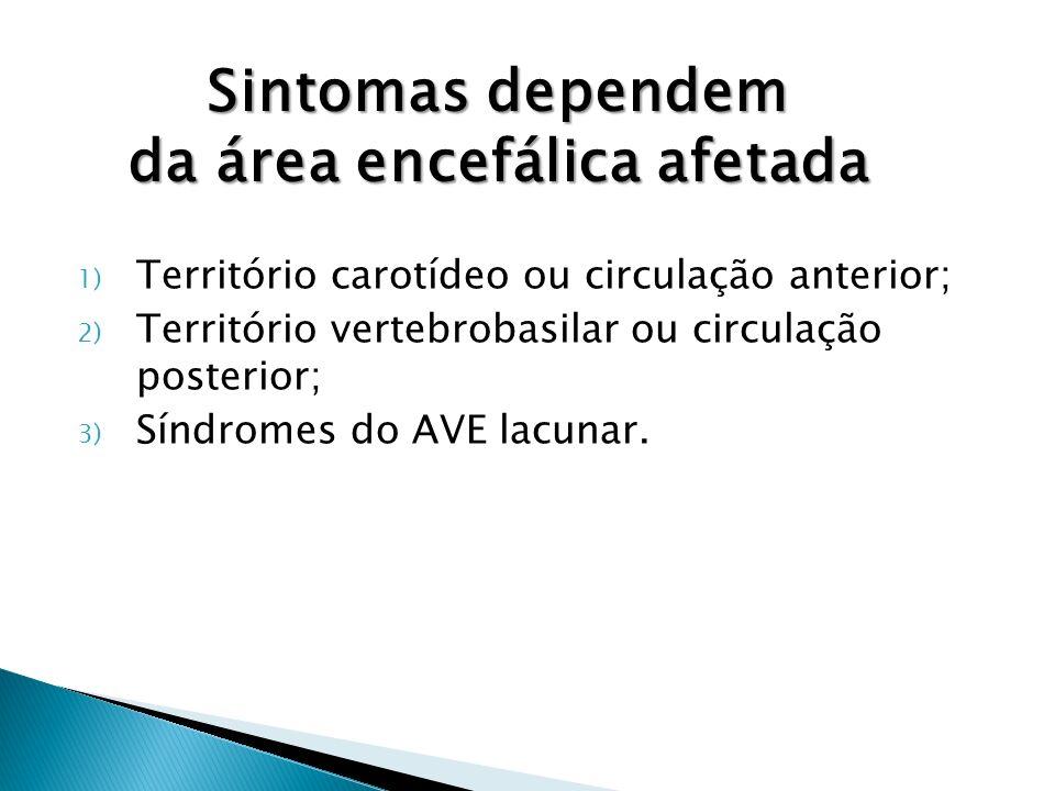 1) Território carotídeo ou circulação anterior; 2) Território vertebrobasilar ou circulação posterior; 3) Síndromes do AVE lacunar.
