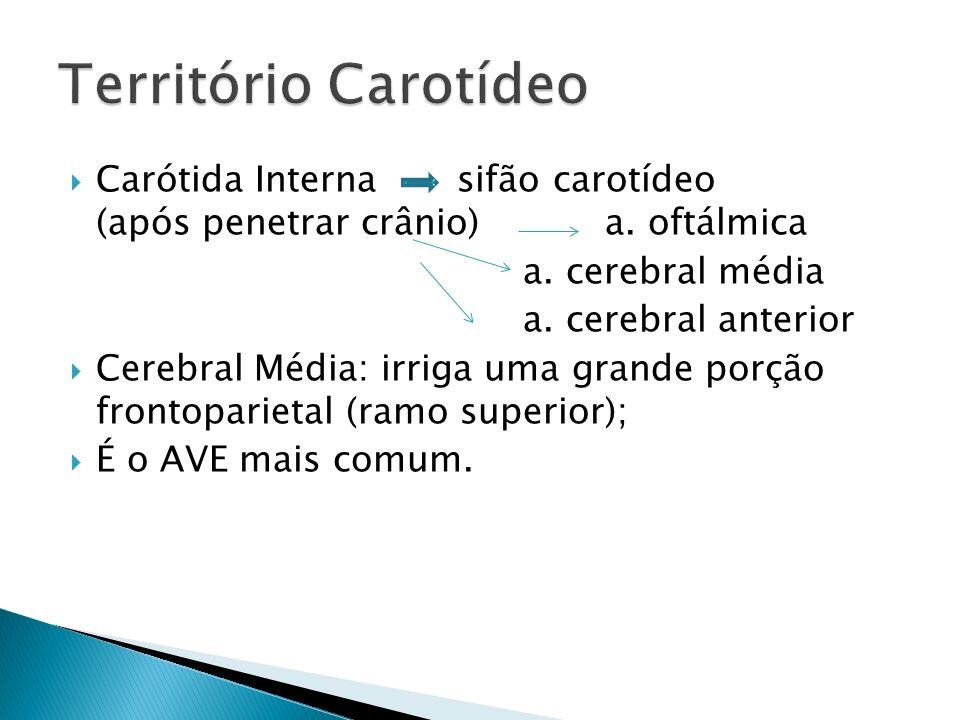Carótida Interna sifão carotídeo (após penetrar crânio) a.