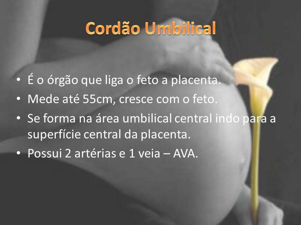 É o órgão que liga o feto a placenta. Mede até 55cm, cresce com o feto. Se forma na área umbilical central indo para a superfície central da placenta.
