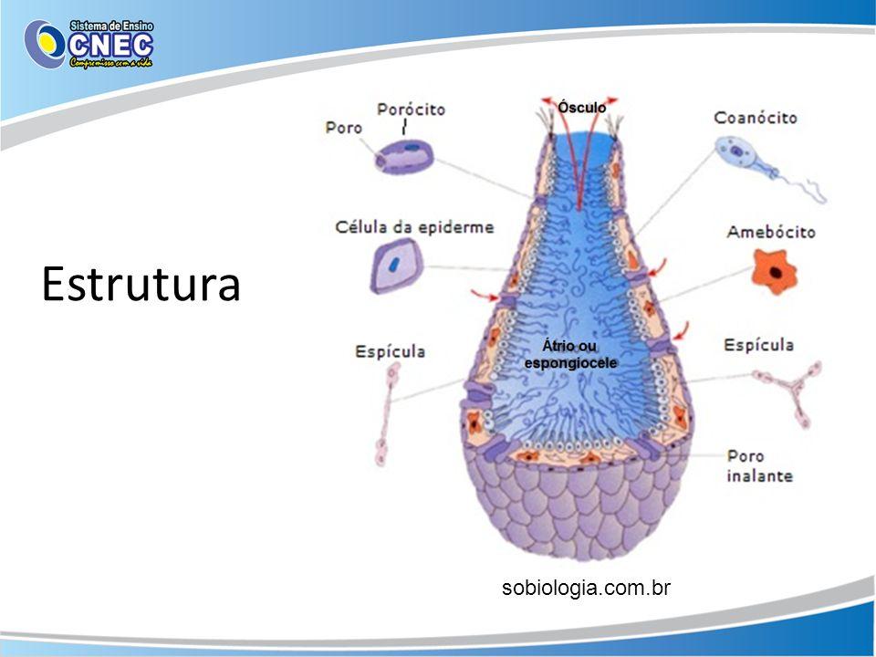 sobiologia.com.br Estrutura