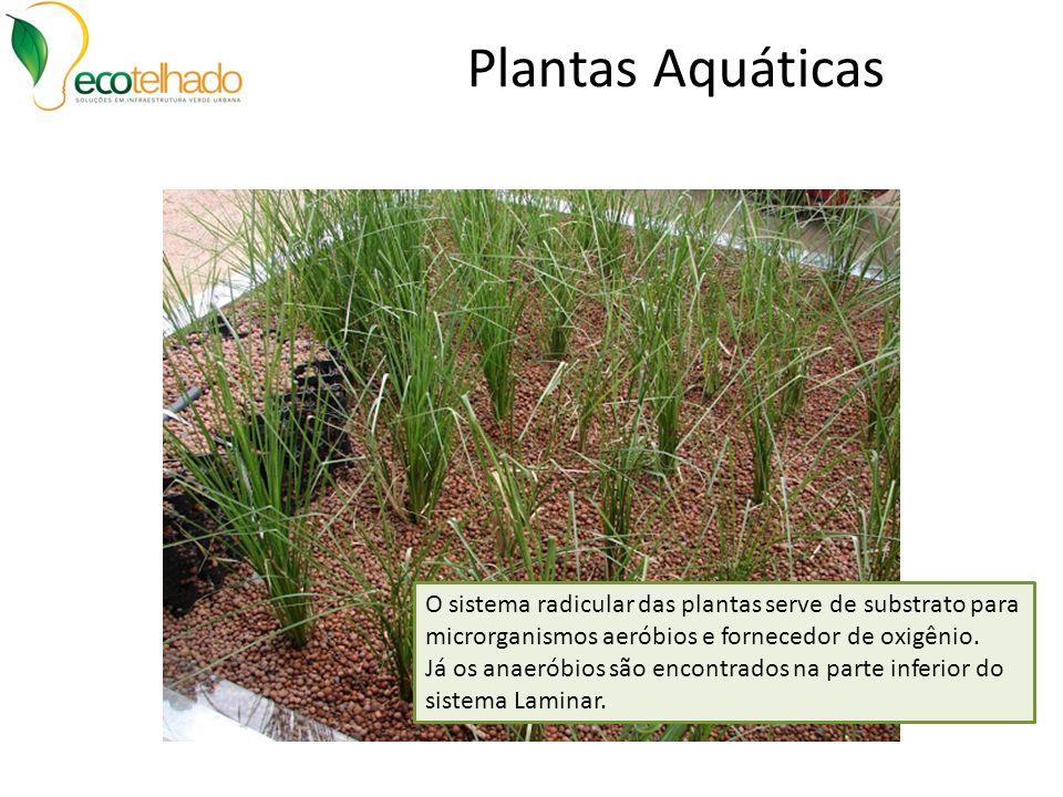 Plantas Aquáticas O sistema radicular das plantas serve de substrato para microrganismos aeróbios e fornecedor de oxigênio. Já os anaeróbios são encon