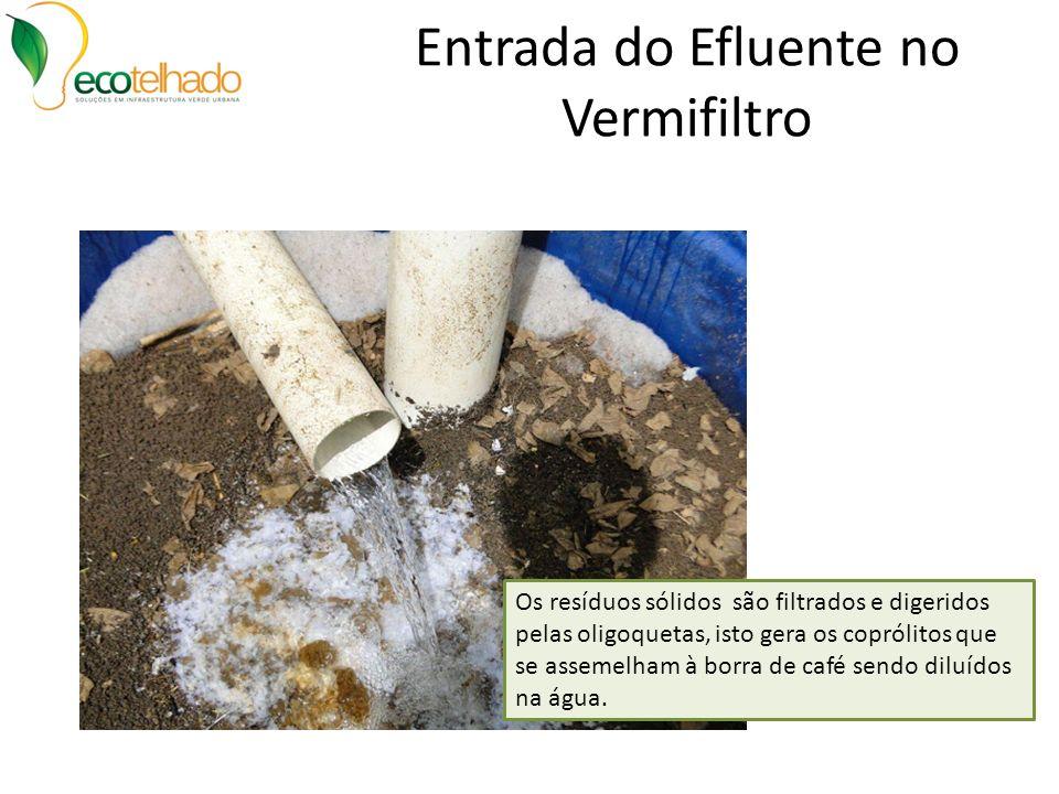 Entrada do Efluente no Vermifiltro Os resíduos sólidos são filtrados e digeridos pelas oligoquetas, isto gera os coprólitos que se assemelham à borra