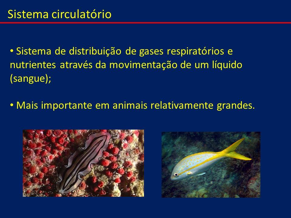 Sistema circulatório Sistema de distribuição de gases respiratórios e nutrientes através da movimentação de um líquido (sangue); Mais importante em an