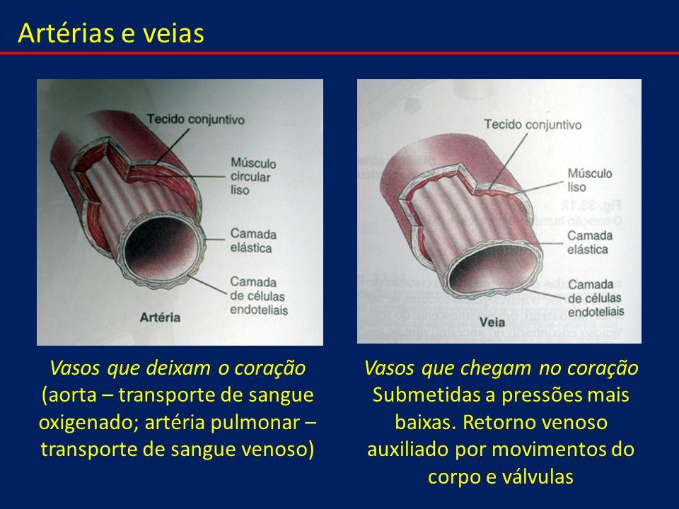 Artérias e veias Vasos que deixam o coração (aorta – transporte de sangue oxigenado; artéria pulmonar – transporte de sangue venoso) Vasos que chegam