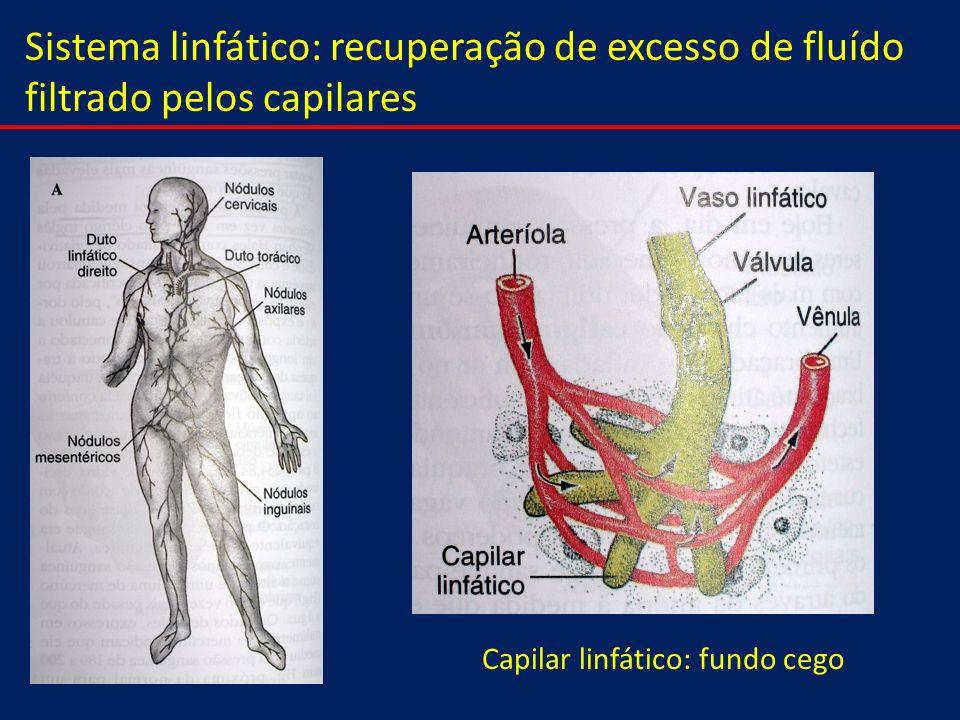 Sistema linfático: recuperação de excesso de fluído filtrado pelos capilares Capilar linfático: fundo cego