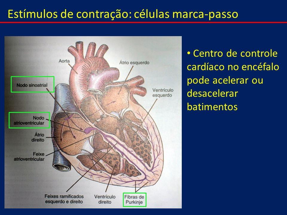 Estímulos de contração: células marca-passo Centro de controle cardíaco no encéfalo pode acelerar ou desacelerar batimentos
