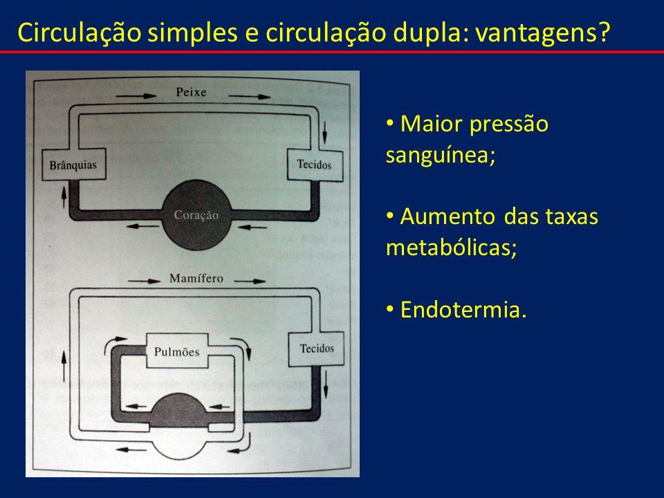 Circulação simples e circulação dupla: vantagens? Maior pressão sanguínea; Aumento das taxas metabólicas; Endotermia.