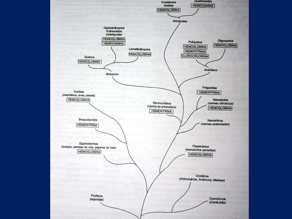 Circulação fechada Moluscos cefalópodes, Anelídeos, Equinodermos e Cordados; Sangue confinado aos vasos ao longo de todo o percurso; Sistema arterial de distribuição (artérias e arteríolas); Sistema venoso de retorno (veias e vênulas); Capilares conectam artérias e veias; Circulação relativamente rápida; Pressão alta; Distribuição do sangue bem regulada (variação no diâmetro dos vasos sanguíneos).