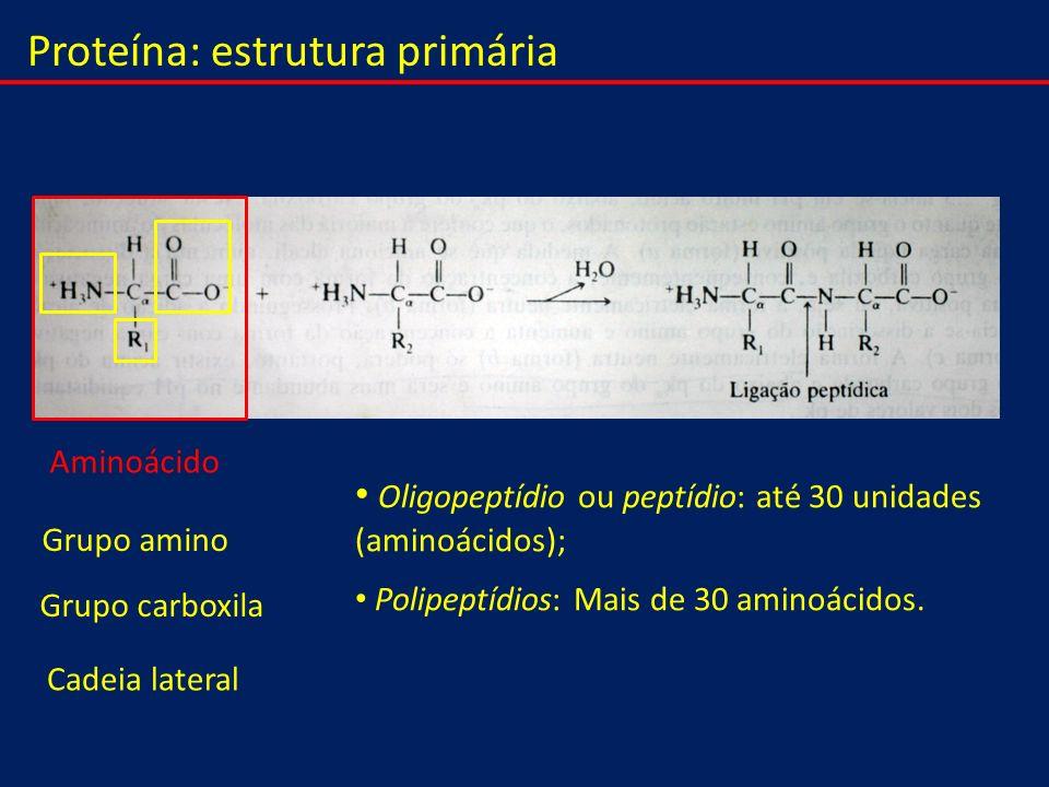 Proteína: estrutura primária Aminoácido Grupo amino Grupo carboxila Cadeia lateral Oligopeptídio ou peptídio: até 30 unidades (aminoácidos); Polipeptí