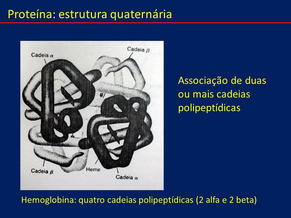 Proteína: estrutura quaternária Associação de duas ou mais cadeias polipeptídicas Hemoglobina: quatro cadeias polipeptídicas (2 alfa e 2 beta)