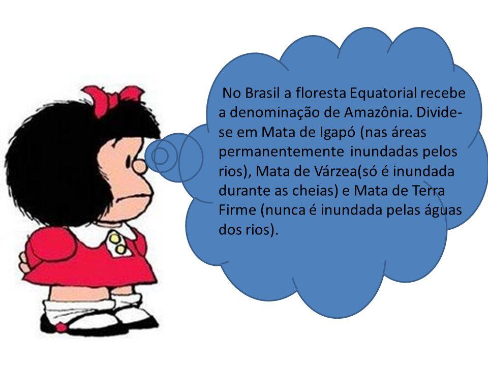 No Brasil a floresta Equatorial recebe a denominação de Amazônia.