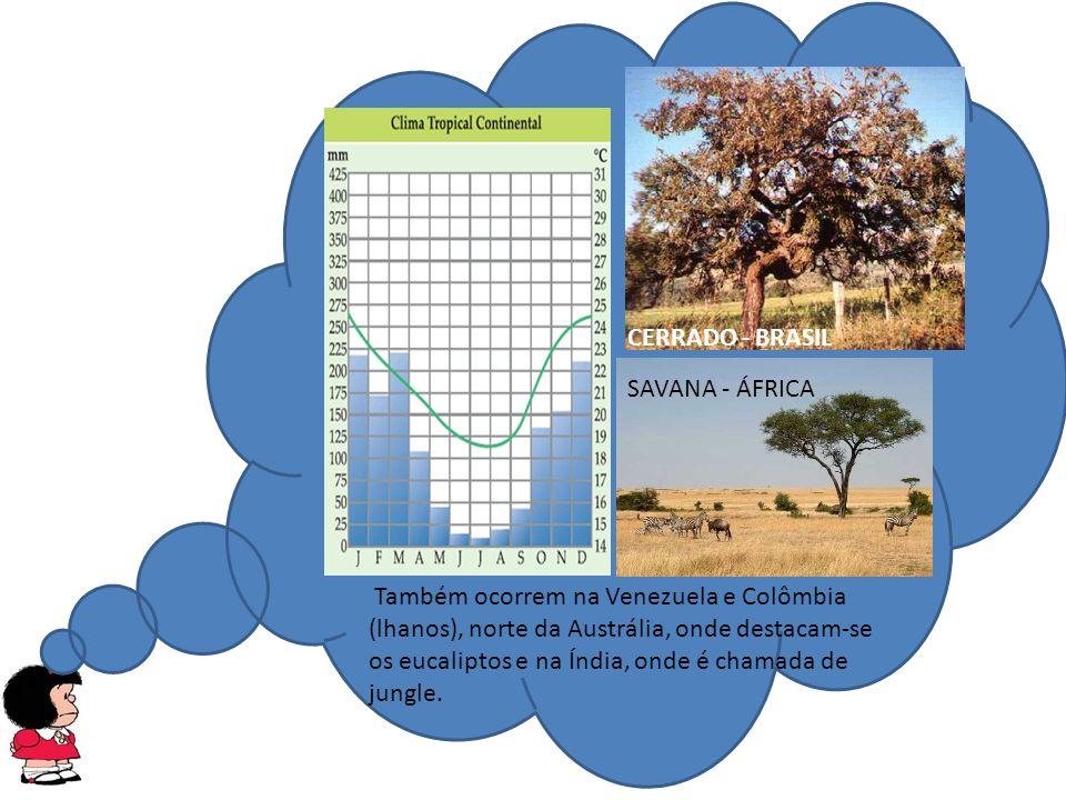 CERRADO - BRASIL SAVANA - ÁFRICA Também ocorrem na Venezuela e Colômbia (lhanos), norte da Austrália, onde destacam-se os eucaliptos e na Índia, onde é chamada de jungle.