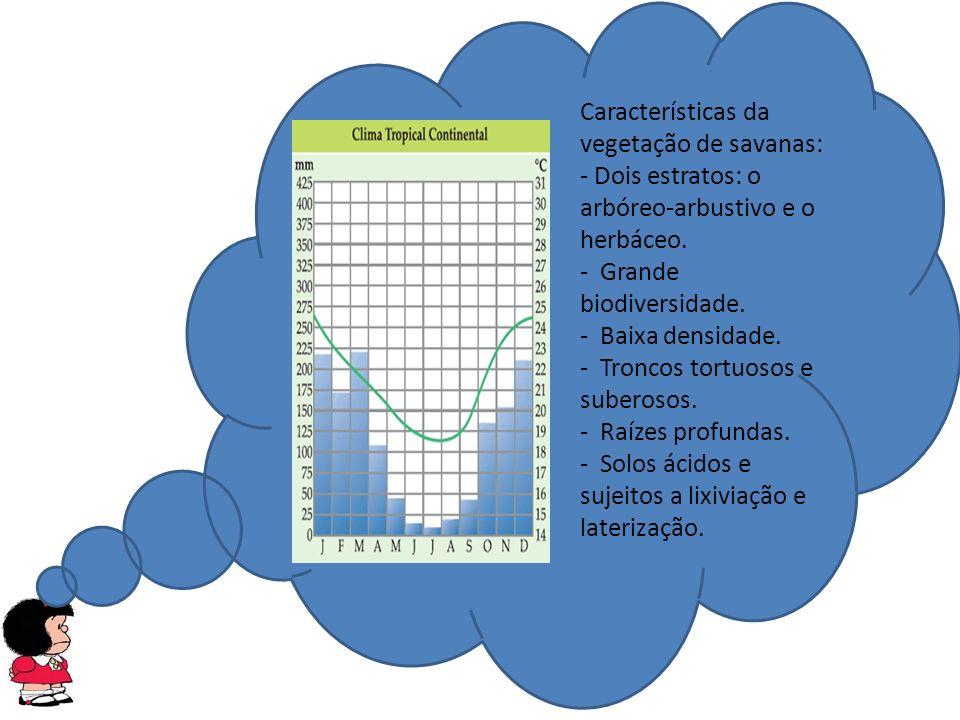 Características da vegetação de savanas: - Dois estratos: o arbóreo-arbustivo e o herbáceo.