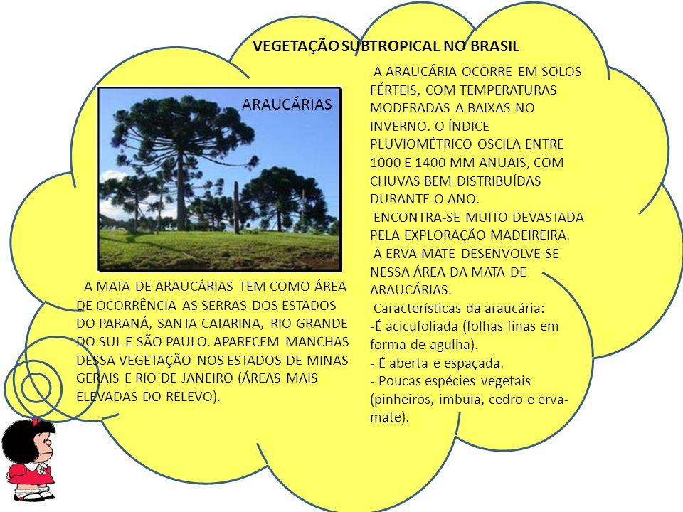 A MATA DE ARAUCÁRIAS TEM COMO ÁREA DE OCORRÊNCIA AS SERRAS DOS ESTADOS DO PARANÁ, SANTA CATARINA, RIO GRANDE DO SUL E SÃO PAULO.