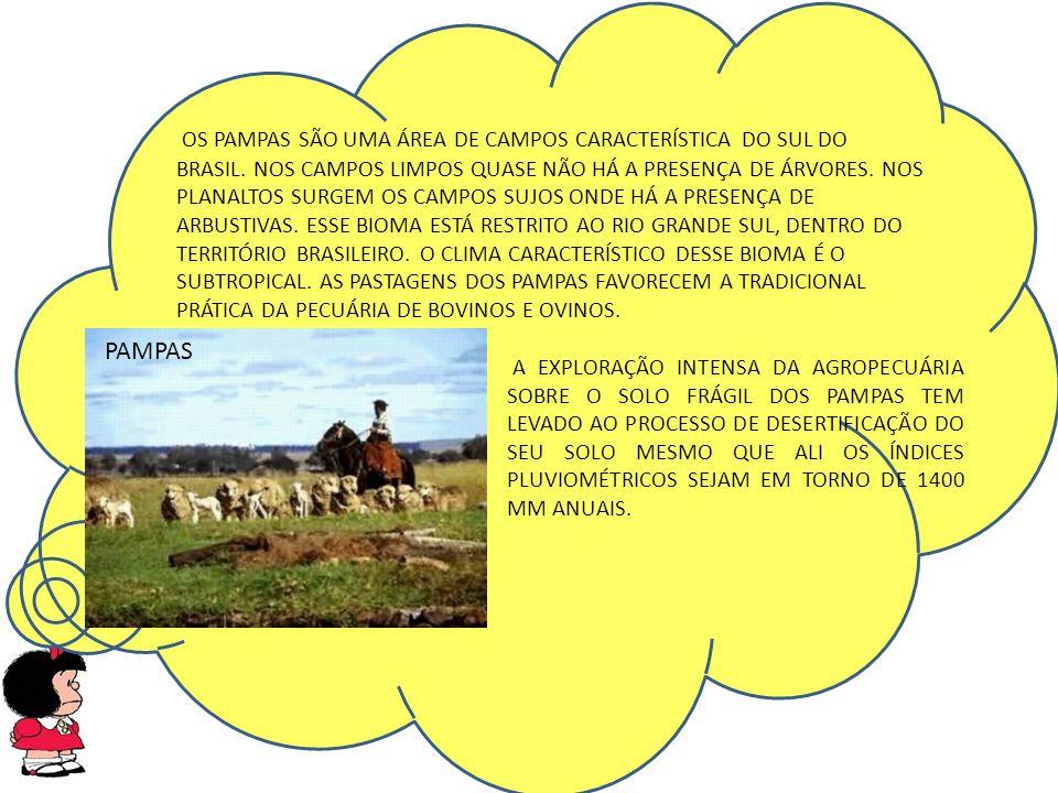 PAMPAS OS PAMPAS SÃO UMA ÁREA DE CAMPOS CARACTERÍSTICA DO SUL DO BRASIL.