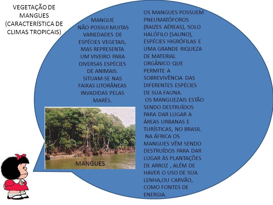 MANGUES MANGUE NÃO POSSUI MUITAS VARIEDADES DE ESPÉCIES VEGETAIS, MAS REPRESENTA UM VIVEIRO PARA DIVERSAS ESPÉCIES DE ANIMAIS.