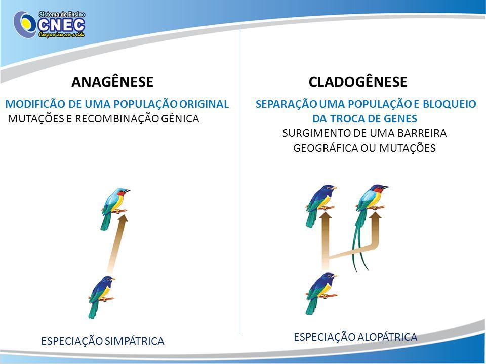 ANAGÊNESECLADOGÊNESE ESPECIAÇÃO SIMPÁTRICA ESPECIAÇÃO ALOPÁTRICA MODIFICÃO DE UMA POPULAÇÃO ORIGINAL MUTAÇÕES E RECOMBINAÇÃO GÊNICA SEPARAÇÃO UMA POPU
