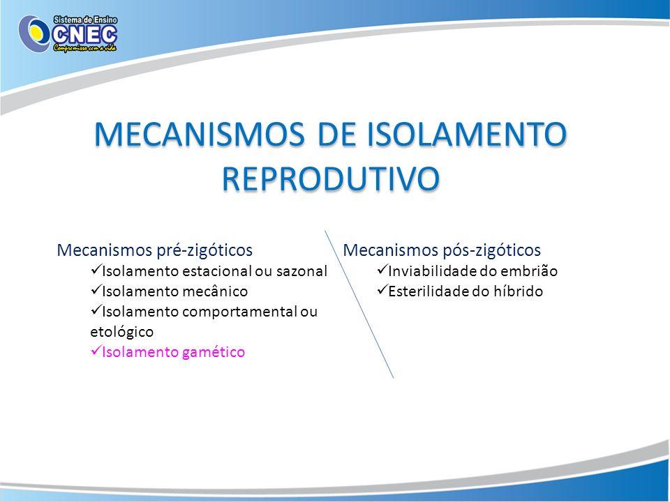 MECANISMOS DE ISOLAMENTO REPRODUTIVO Mecanismos pré-zigóticos Isolamento estacional ou sazonal Isolamento mecânico Isolamento comportamental ou etológ