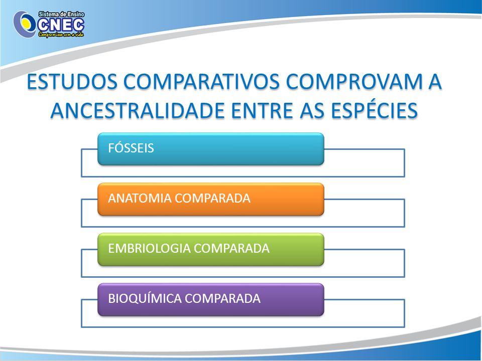 ESTUDOS COMPARATIVOS COMPROVAM A ANCESTRALIDADE ENTRE AS ESPÉCIES FÓSSEISANATOMIA COMPARADAEMBRIOLOGIA COMPARADABIOQUÍMICA COMPARADA
