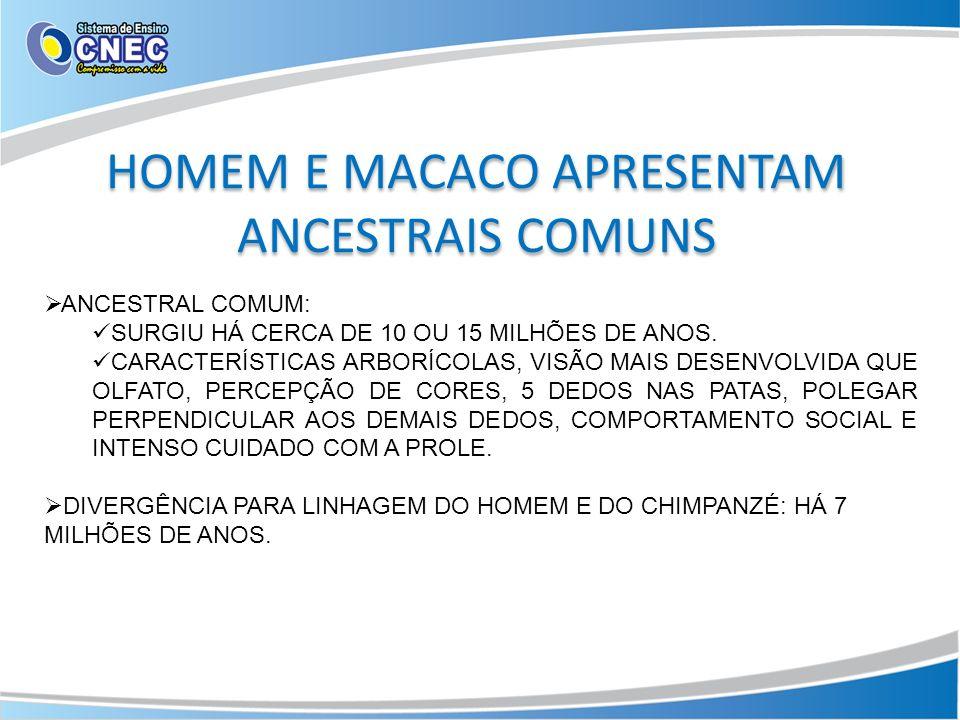 HOMEM E MACACO APRESENTAM ANCESTRAIS COMUNS ANCESTRAL COMUM: SURGIU HÁ CERCA DE 10 OU 15 MILHÕES DE ANOS. CARACTERÍSTICAS ARBORÍCOLAS, VISÃO MAIS DESE