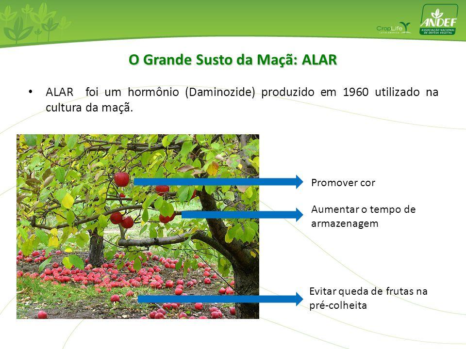 ALAR foi um hormônio (Daminozide) produzido em 1960 utilizado na cultura da maçã. Evitar queda de frutas na pré-colheita Promover cor Aumentar o tempo