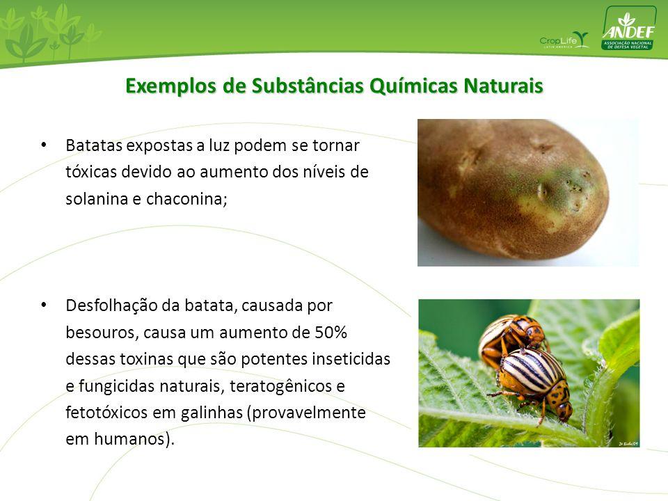 Batatas expostas a luz podem se tornar tóxicas devido ao aumento dos níveis de solanina e chaconina; Desfolhação da batata, causada por besouros, caus