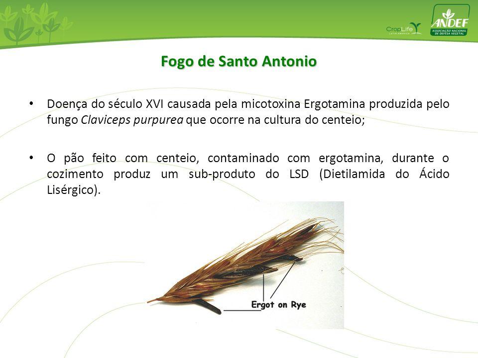 Fogo de Santo Antonio Doença do século XVI causada pela micotoxina Ergotamina produzida pelo fungo Claviceps purpurea que ocorre na cultura do centeio