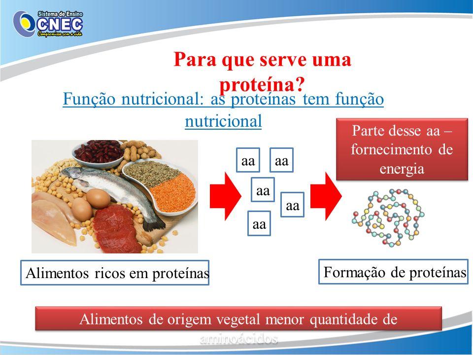 Função nutricional: as proteínas tem função nutricional Para que serve uma proteína? Alimentos ricos em proteínas aa Parte desse aa – fornecimento de