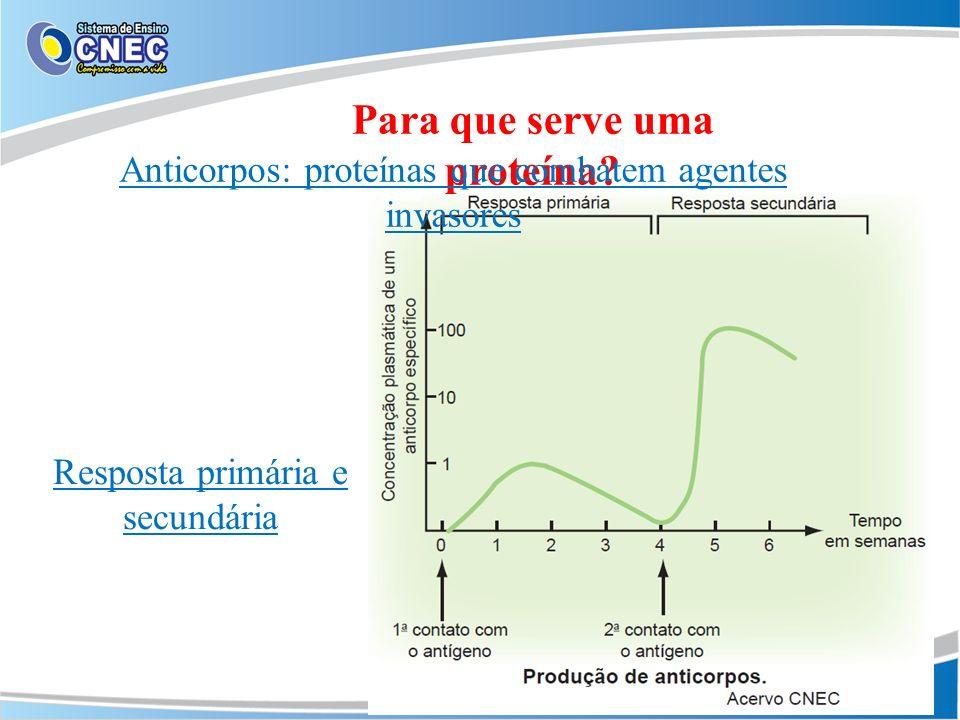 Resposta primária e secundária Para que serve uma proteína? Anticorpos: proteínas que combatem agentes invasores