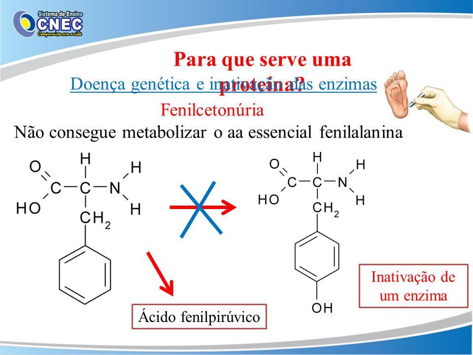 Para que serve uma proteína? Doença genética e inativação das enzimas Fenilcetonúria Não consegue metabolizar o aa essencial fenilalanina Ácido fenilp