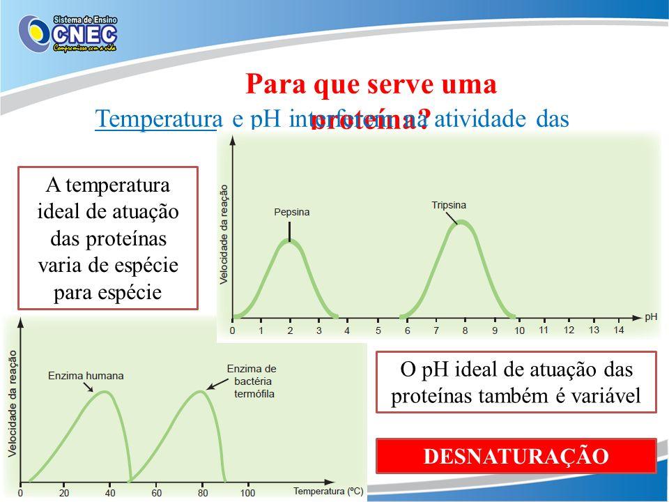 Para que serve uma proteína? Temperatura e pH interferem na atividade das enzimas A temperatura ideal de atuação das proteínas varia de espécie para e