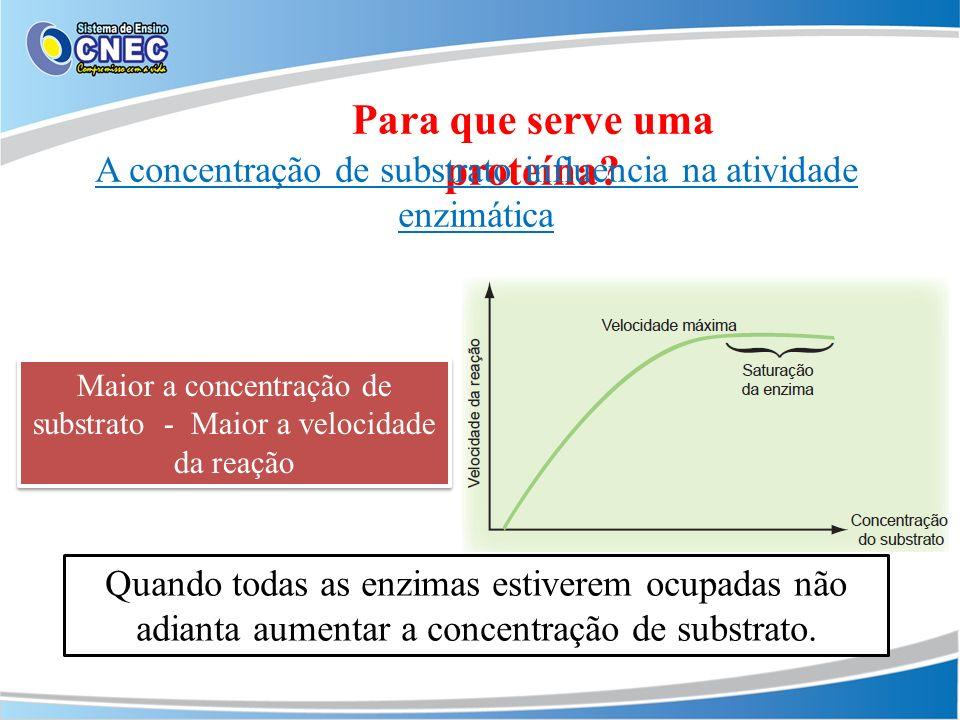 Para que serve uma proteína? A concentração de substrato influencia na atividade enzimática Maior a concentração de substrato - Maior a velocidade da