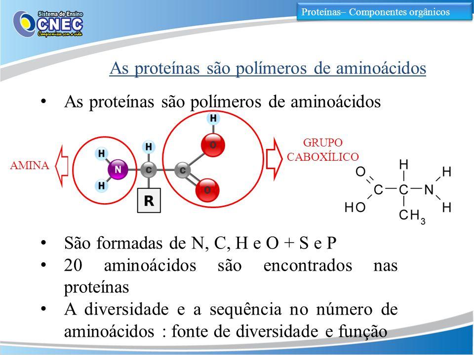 As proteínas são polímeros de aminoácidos Proteínas– Componentes orgânicos As proteínas são polímeros de aminoácidos São formadas de N, C, H e O + S e