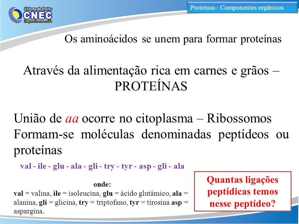 Proteínas– Componentes orgânicos Os aminoácidos se unem para formar proteínas Através da alimentação rica em carnes e grãos – PROTEÍNAS União de aa oc